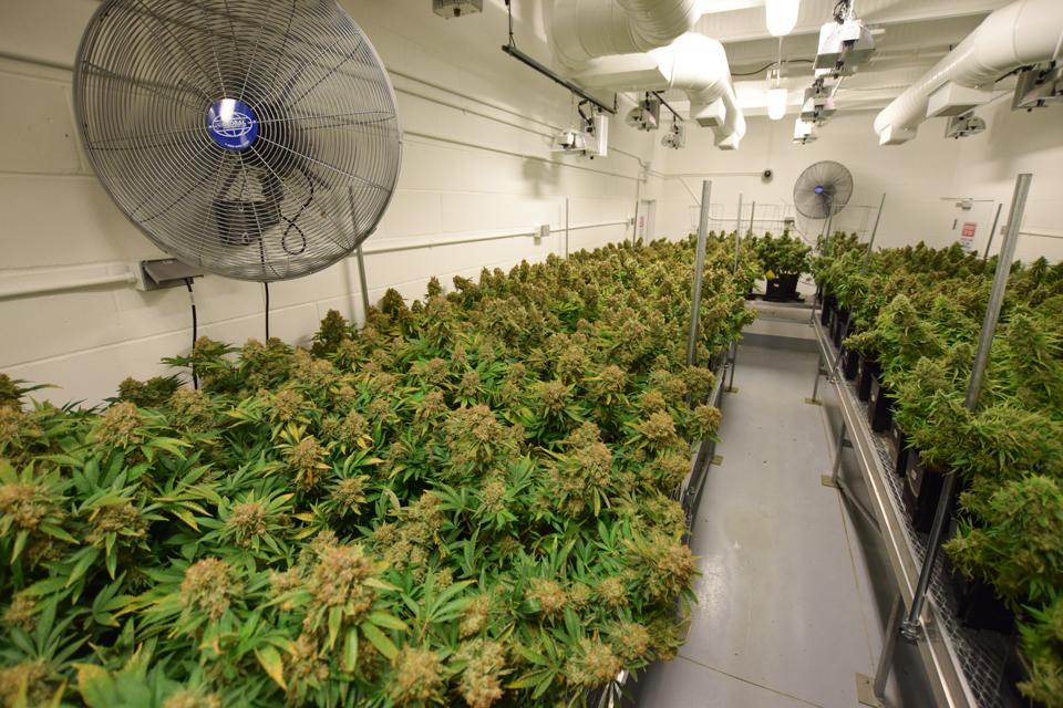 marijuana temperature and humidity