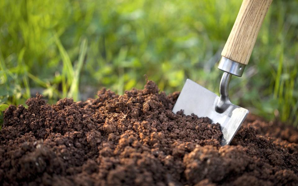 Preparing the Soil for Marijuana